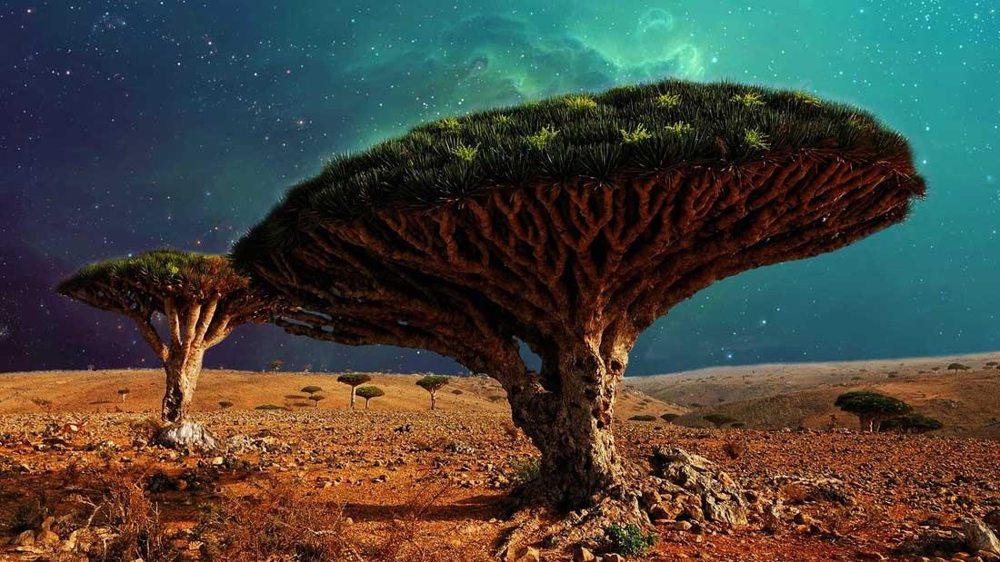 El mundo perdido de Socotra: el lugar más extraño de la Tierra