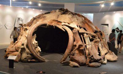 La impresionante cabaña de 25.000 años construida con huesos de mamut