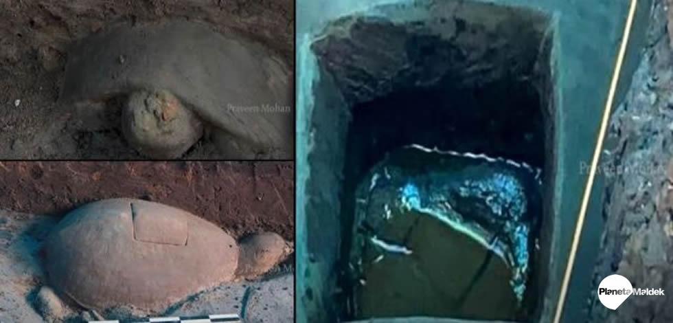 Hallan antiguos cristales de cuarzo en el interior de un tortuga de piedra en Camboya