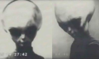 """El vídeo filtrado de un """"alienígena"""" gris sobreviviente de Roswell"""