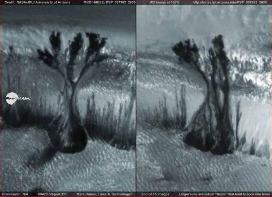 ¿Existen árboles en Marte?