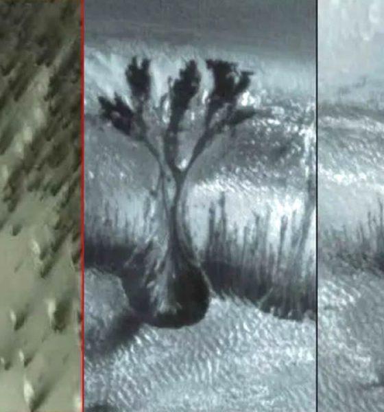 ¿Árboles en Marte? Extrañas imágenes de algo que nos ocultan