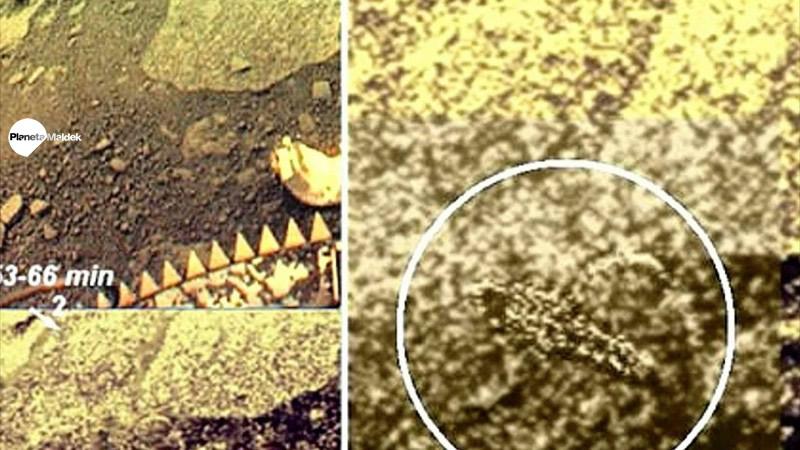 Supuestos organismos vivientes en Venus.