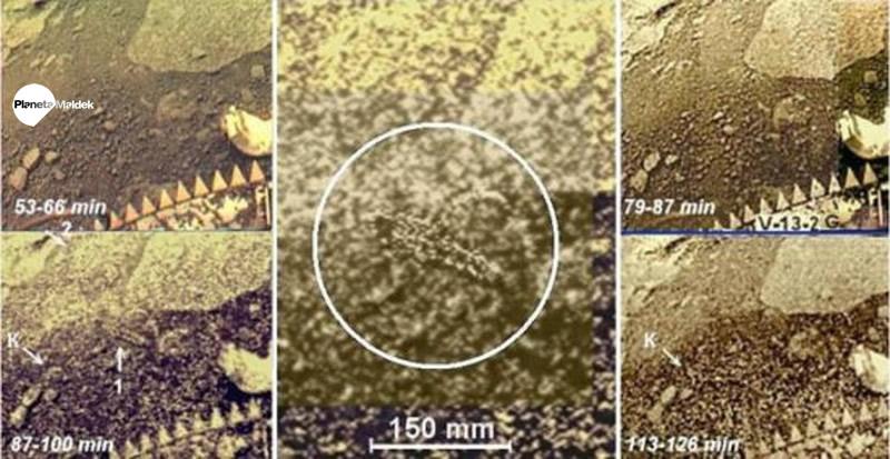 """Otra imagen del supuesto organismo que fue denominado """"escorpión"""" en Venus."""