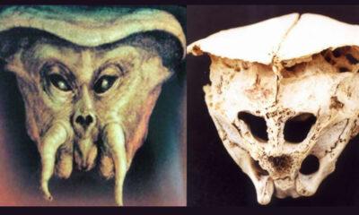 Cráneo de Ródope: ¿Evidencia de alienígenas en la Tierra?